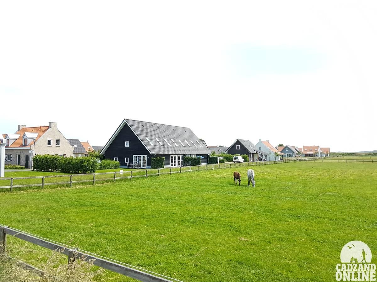 Paarden-in-wei-vakantiehuis-Nieuwvliet-20-personen