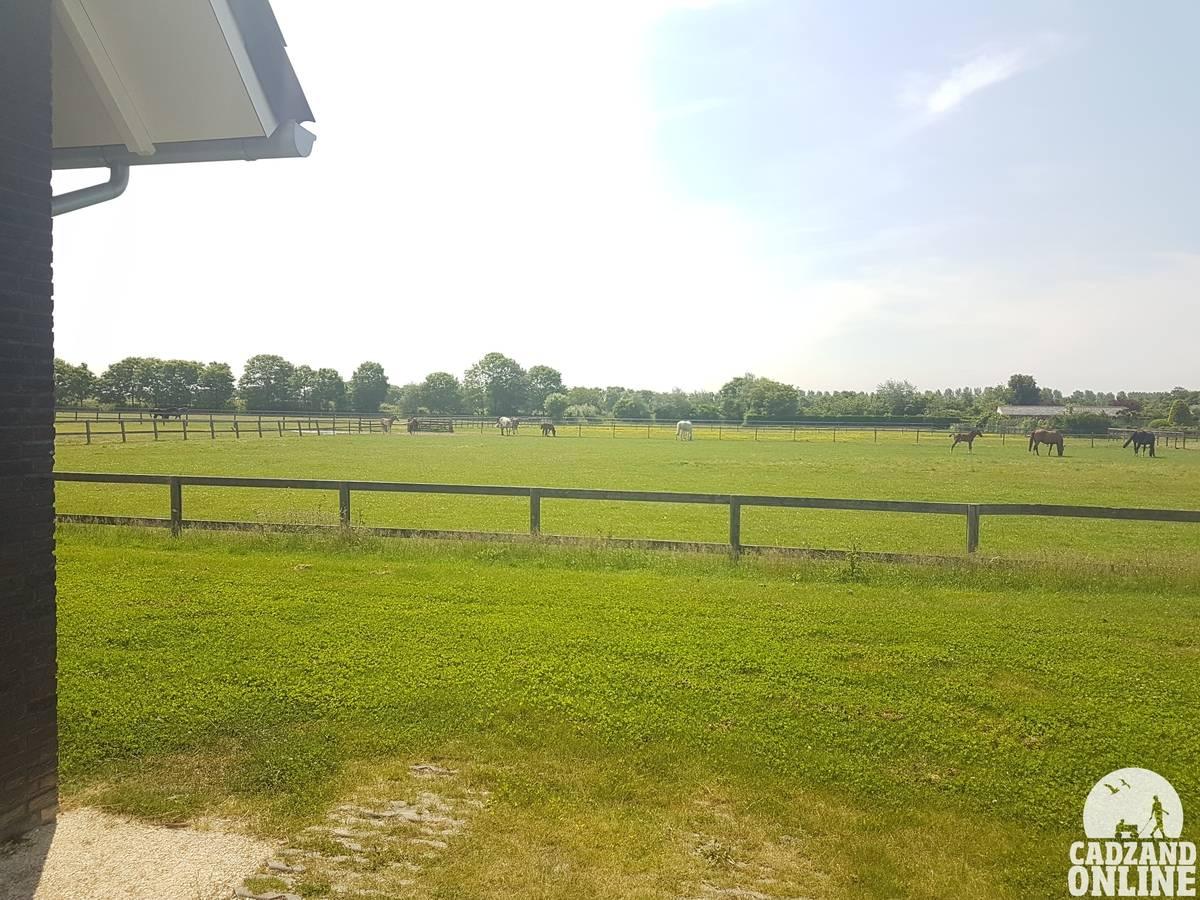 Paardenwei-vakantiehuis-Nieuwvliet