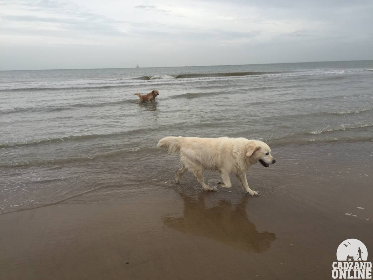 honden-strand-Cadzand