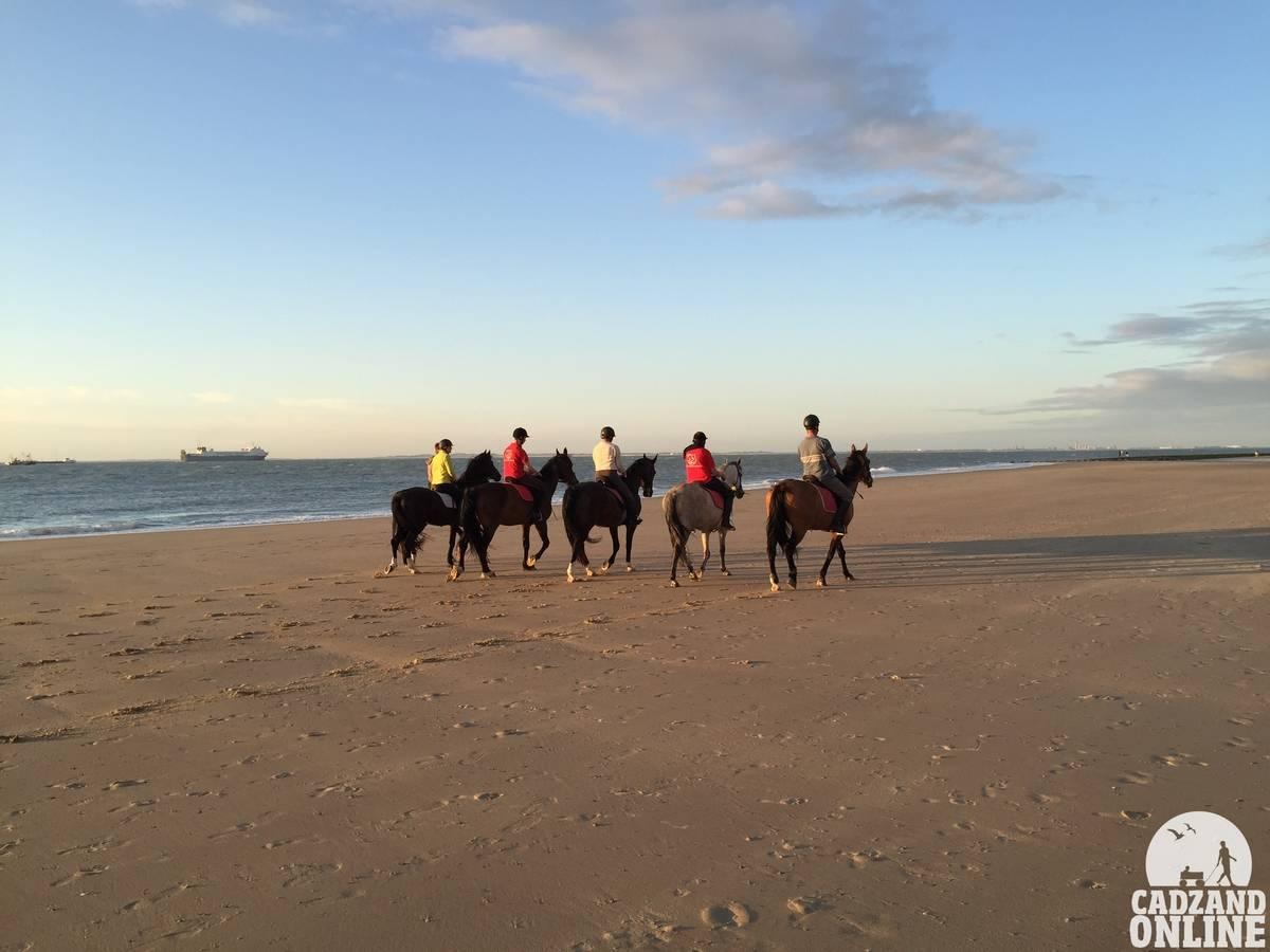 paarden-op-strand-Cadzand