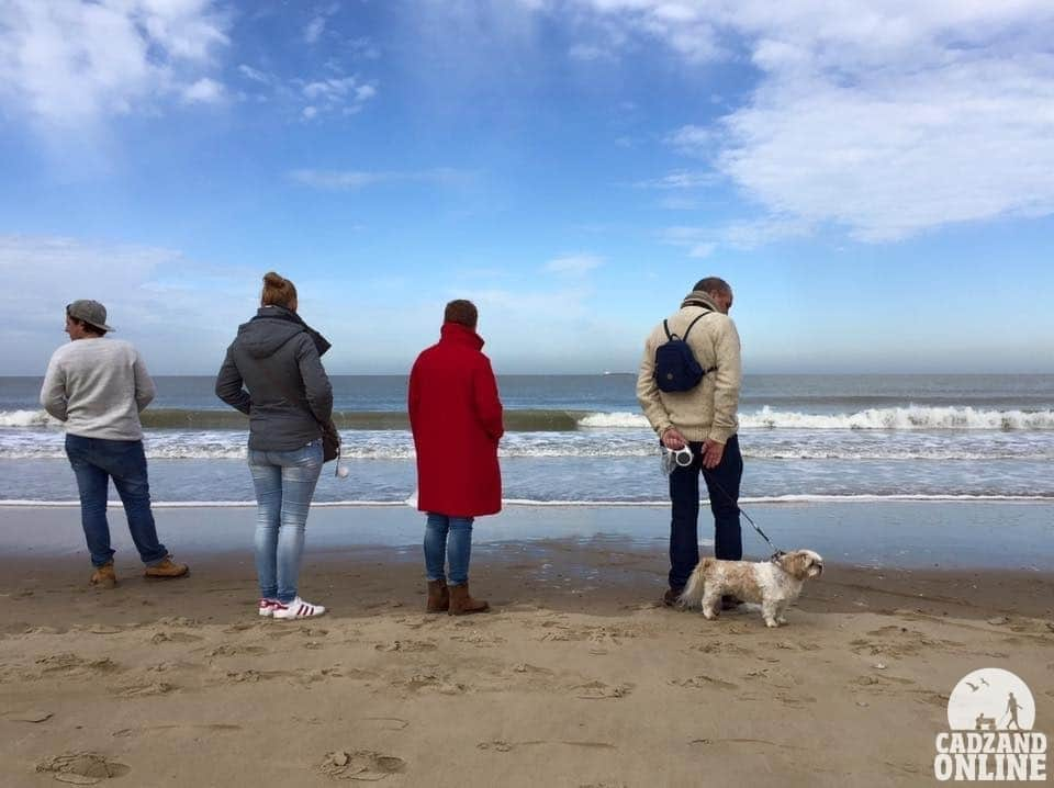 Hond-op-strand-Cadzand